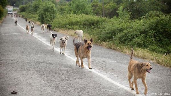 Κυνηγετικός Σύλλογος Κοζάνης: Το τραγελαφικό νομοσχέδιο «ΑΡΓΟΣ» για τα ζώα συντροφιάς και τα αδέσποτα