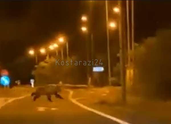 Αρκούδα βγήκε βόλτα στο Κωσταράζι (βίντεο)